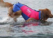 水辺で愛犬用ウェットスーツ